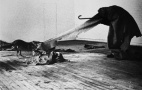joseph_beuys_i_like_america_and_america_likes_me_03
